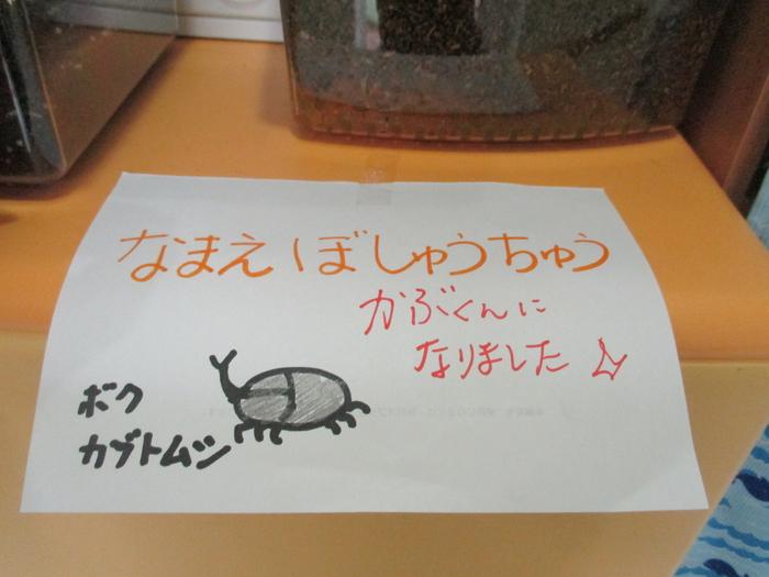 かぶくん②.jpg
