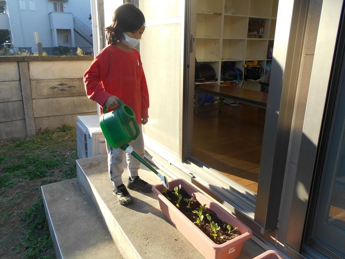 どんぐり小松菜収穫⑨.JPG