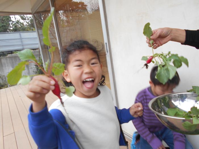 野菜収穫2.JPG