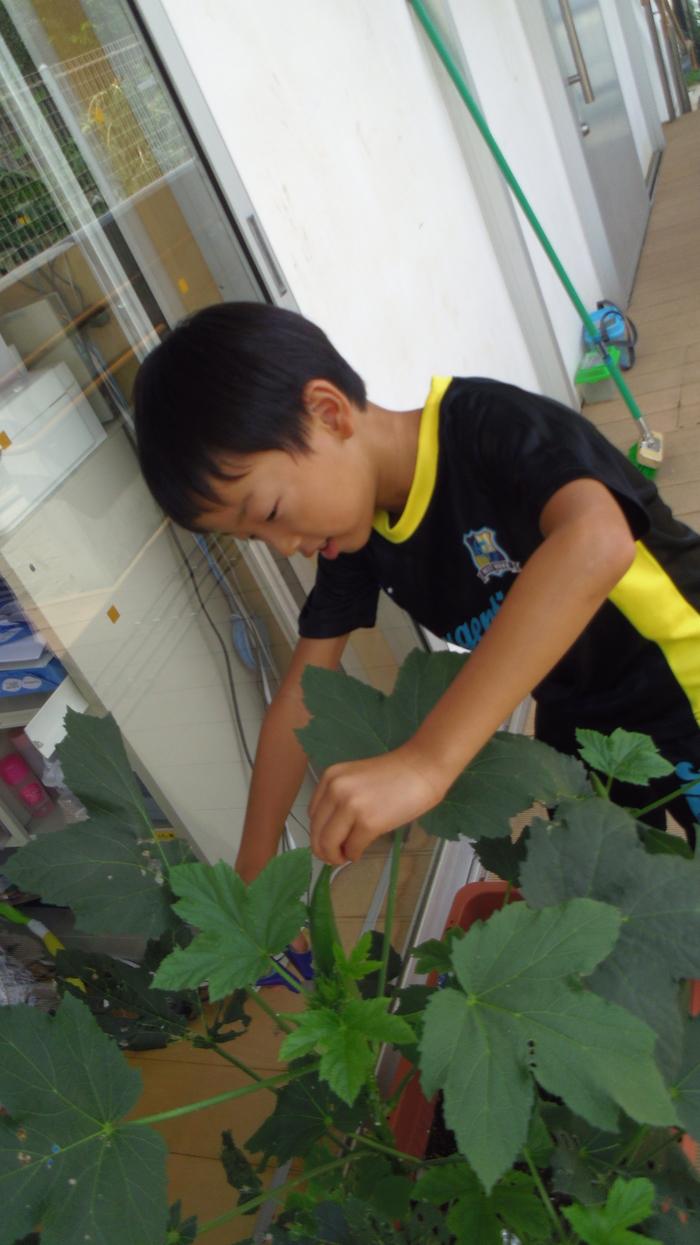 くじら夏8のおいしい野菜つくり④[1].JPG